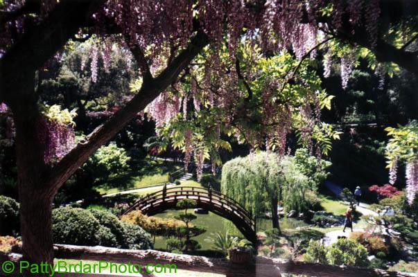 Huntington Botanical Gardens Pasadena Jim Mcconnell